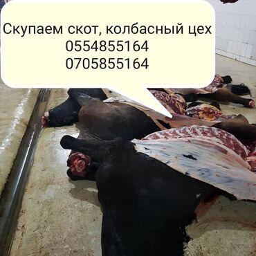 рубщик мяса в Кыргызстан: Скупка скотов на мясо и вынужденный забой колбасный цех!!! Круглосуто