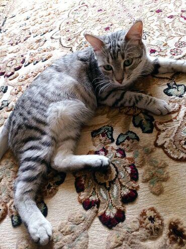 Пропал молодой котик Барсик, в районе Восток 5, помогите найти, отблаг