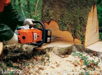 Пилю деревья,Бутак кыям.Срубить дерево.Спилить дерево.Спилить