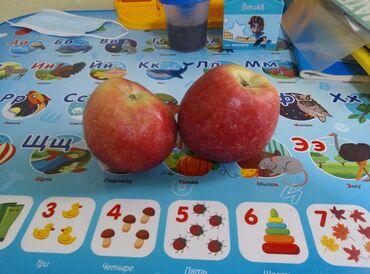 """73 объявлений: Продаю яблоки """" Превосход"""" 5,6 тонны, в Кемине с сада"""