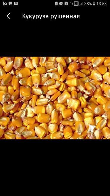 Прозрачные решетки на окна цена - Кыргызстан: Продаю рушенную кукурузу 10 тон оптом сразу