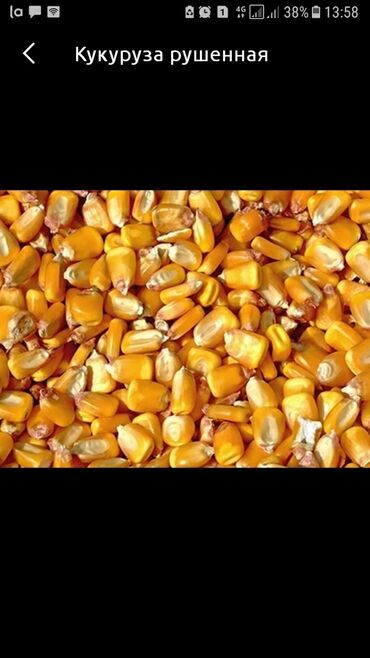 gtx 1080 ti цена в Кыргызстан: Продаю рушенную кукурузу 10 тон оптом сразу