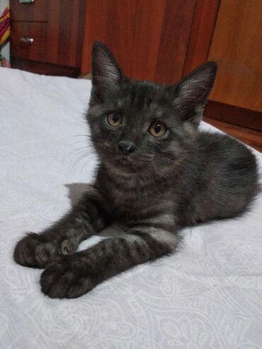 Животные - Дачное (ГЭС-5): Отдаем котенка в добрые руки. Возраст: 3 месяца, к лотку приучен