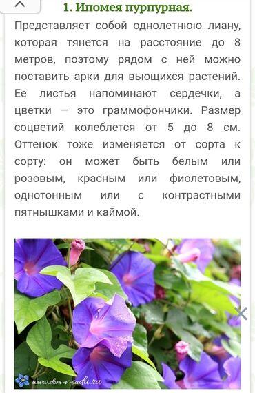 для невесты в Кыргызстан: Рассада разных цветов. Календула лекарственная,череда,тоже