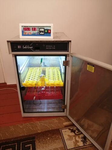 инкубаторы автоматические в Кыргызстан: Инкубатор Супер ! На все виды яиц ! два в одном онже и выводной на 130