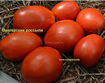 132 объявлений: Куплю помидор оптом сорт венгерский