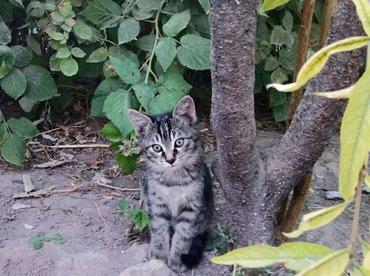 ОТДАМ ДАРОМ в хорошие заботливые руки! 3х месячные котята,приученные к в Бишкек