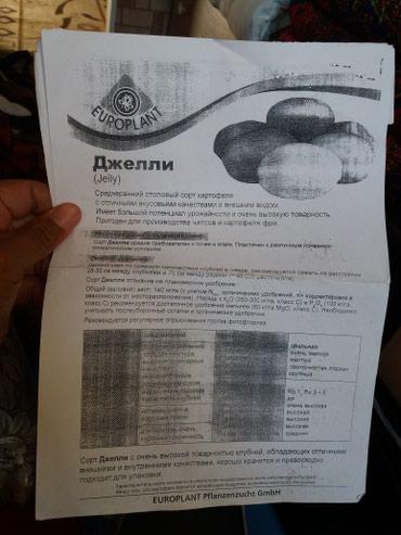 Семенной картофель джели элита  в Кызыл-Суу