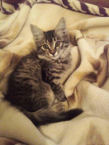 194 объявлений | ЖИВОТНЫЕ: Фонд помощи Животным Добрые руки, ищет добрые руки для котёнка, Девочк