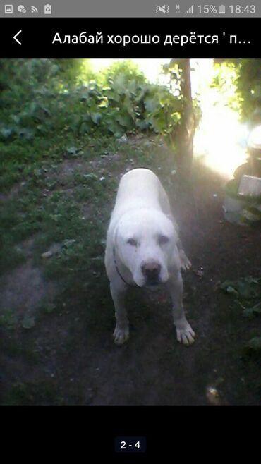 Пропала старая собака собаке 13 лет просьба вернуть за вознаграждение