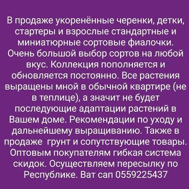 Фиалки - Кыргызстан: Фиалки