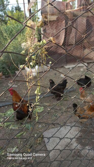 Животные - Маловодное: Птицы