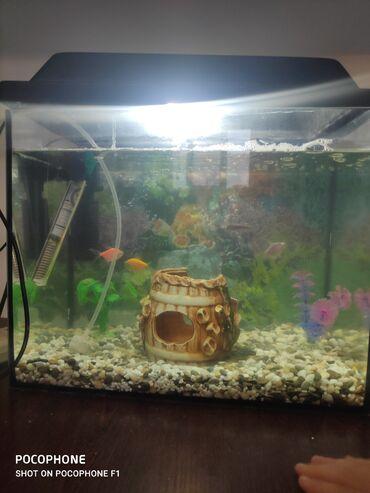 Аквариумы - Кыргызстан: Продаю аквариум с рыбками