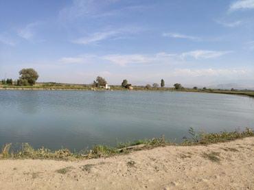 Продаю пруд (действующий) в Бишкек