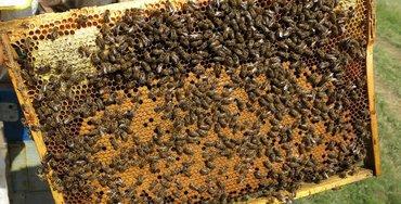 В продаже пчелопакеты 3+1- в количестве 30 пчелопакетов.Порода