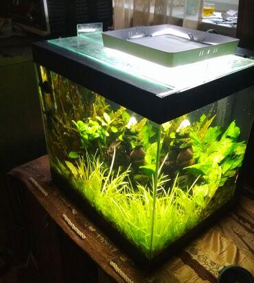 194 объявлений | ЖИВОТНЫЕ: Продаю аквариум 40 литров. С аквариумом отдаю бесплатно:Фильтр