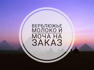 Принимаем заказы на верблюжье молоко в Бишкек