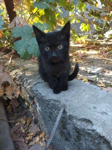 73 объявлений   ЖИВОТНЫЕ: Отдадим котят в добрые руки!!! Чистоплотные, приучены к лотку, всё