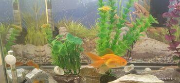 Продаются 40л.аквариум в комплекте с 6 рыбками г. Каракол