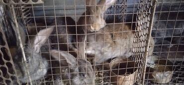 Животные - Кок-Ой: Продаю кроликов