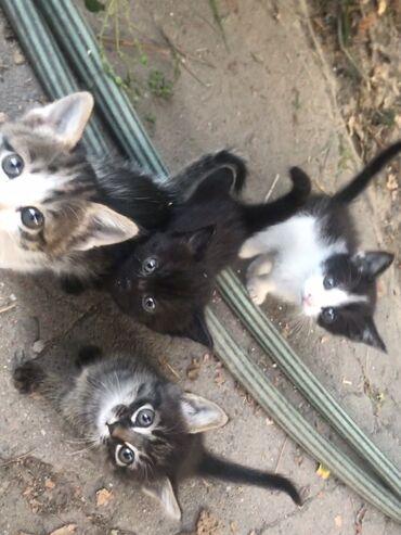 holodilnikov na dom в Кыргызстан: Отдаём котят в добрые руки, бесплатно! Котята игривые, к песочку приуч