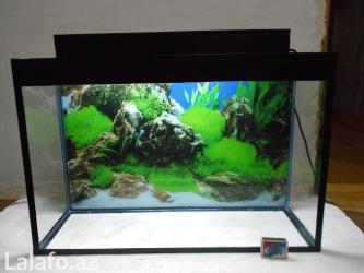 Bakı şəhərində Teze akvarium  60 litre