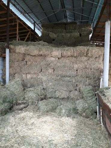 Продаю тюки сено клевер второй,третий пакос тюки плотные хорошие