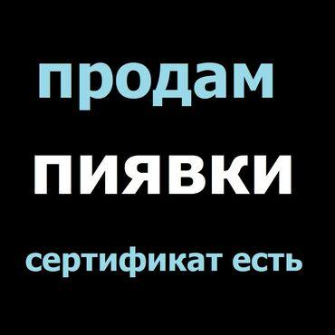 фонтан продажа в Кыргызстан: Пиявки гирудотерапия Продаю сертифицированные пиявки. - продажа