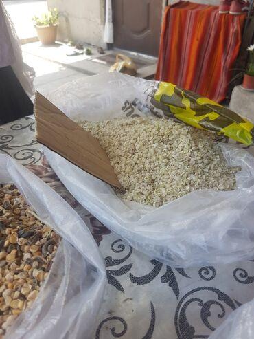 инкубатор-для-яиц-купить в Кыргызстан: Корм для крс, мрс и для птиц