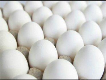 Bakı şəhərində Inqubator üçün yumurta 25 qəpik. 95-100% cıxış var