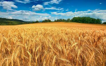 Аренда земельных участков в Бишкек: Аренда 5000 соток Для сельского хозяйства от собственника