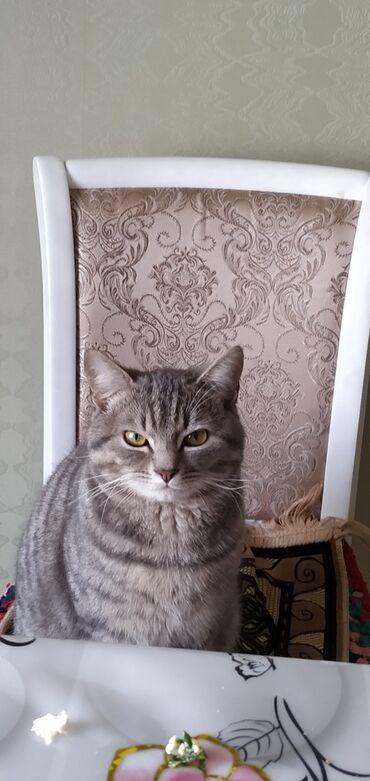 Продаю кота. 8месяцев