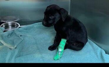 85 объявлений: У кого щенок или собака заболела парвовирусом прошу обращаться Есть