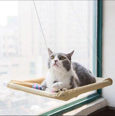 домик туалет для кошек в Кыргызстан: Гамак на окно для кошекЛежанка для кошекВсе хозяева домашних кошек