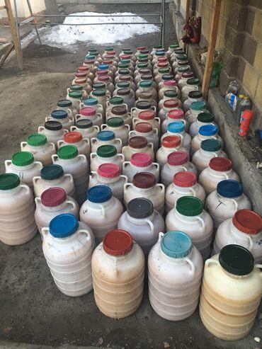Мыши - Кыргызстан: Чистый горный мёд из токтогула