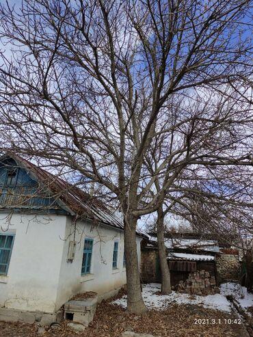 Продаю дерево орех. Самовывоз, самоспил. Находится село Беш Кунгей