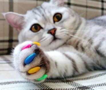 колпачки на когти кошкам в Кыргызстан: Продаются мягкие, селиконовые антицарапки для когтей. Они защитят