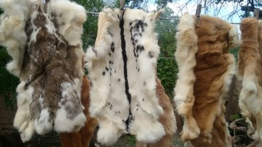 шкуры для дома в Кыргызстан: Продаю. кроличьи шкурки 22. шт