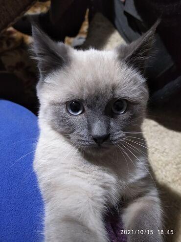Ищем добрых хозяев для котика. Игривый, к лотку приучен, блох нет