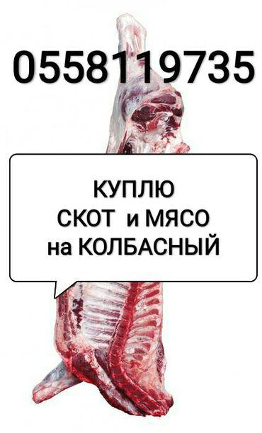 животный-с в Кыргызстан: Приёмка скота на колбасу