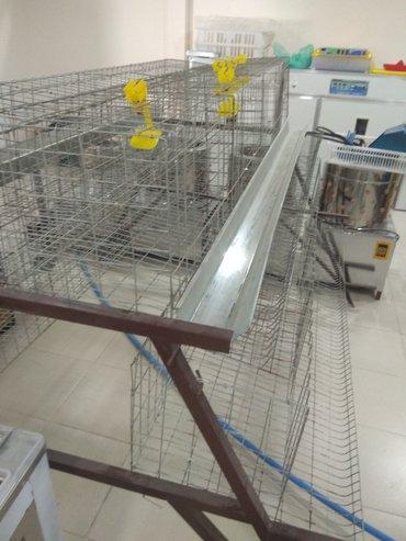 Клетки для кур несушек и другие товары для птицы в Бишкек