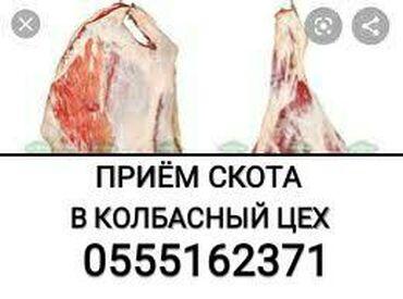 купить постельное белье для гостиниц в розницу в Кыргызстан: В КОЛБАСНЫЙ ЦЕХ куплю скот Любой УПИТАННОСТИ И ВОЗРАСТА в любое время