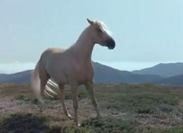 Животные - Шеки: Satilir