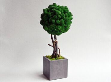 Стабилизированный мох Изделия уникальный отличный подарок для вашей