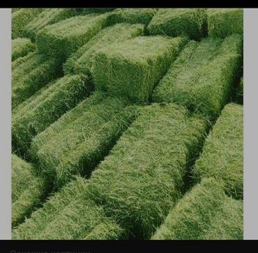 Продаю сено клевер. Тюки большие и соответственно тяжёлые. Привезу по