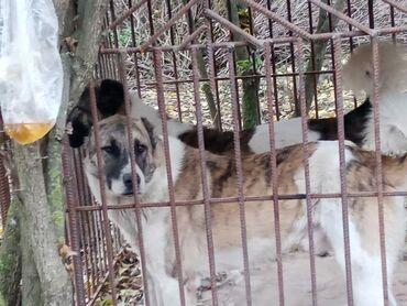 Животные - Наваги: Собаки