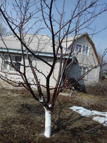 Услуги садовника. обрезка в Бишкек