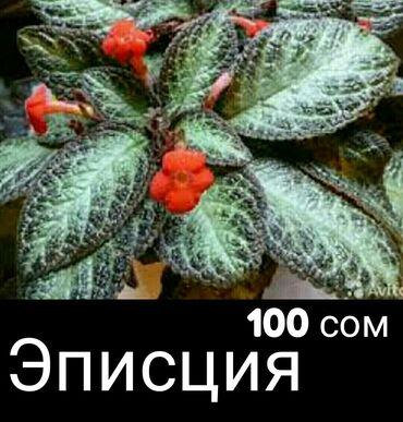 Распродажа комнатных растений. Живу и работаю рядом с дордой моторс