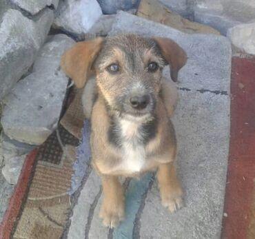 Ищем дом для щенка девочки, возраст 2 месяца. Отличный охранник и звон