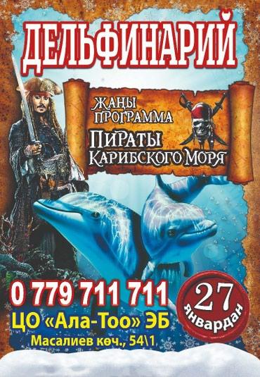 Дельфинарий в Бишкеке, весь февраль и в Бишкек